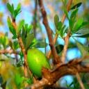Arganový olej - zlato, které rozdává zdraví a krásu