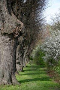 Energie ze stromů - přírodní léčba mnoha závažných onemocnění