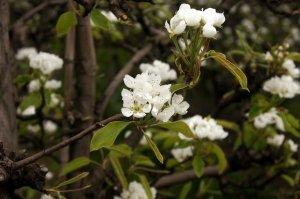 Jaro na tváři i v květináči