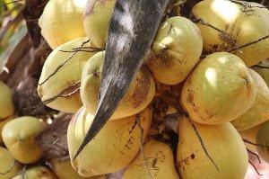 Kokosový peeling a medovo-kokosová domácí maska oživí vaši pleť