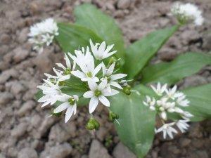 Květen - čas na sběr bylinek