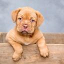 Psi zaženou deprese, ale i jiné choroby