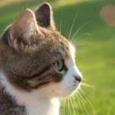 Léčba zvířaty - koně, psy, kočky......