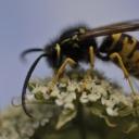 Nebezpečí ve volné přírodě - vosa, komár, klíště ....