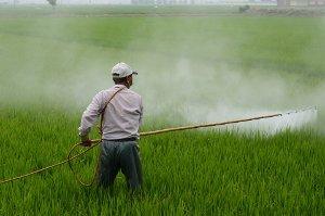 Ovoce a zelenina bez pesticidů - zdraví z vaší zahrádky