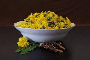 Pampeliška nepatří do koše s plevelem, ale do zdravého jídelníčku!