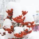 Poslední možnost radovánek na sněhu