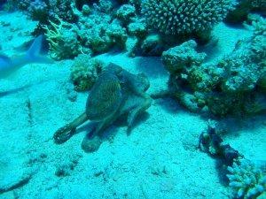 Potápění na jeden nádech - freediving