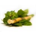 Siwak - přírodní zubní kartáček s příchutí máty
