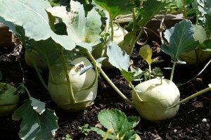 Zelenina, která vrací zdraví a štíhlost