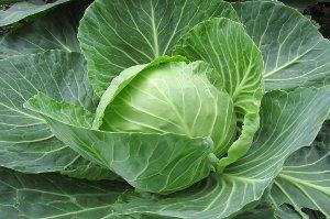 Zelí - zelenina proti rakovině, obezitě, cukrovce a stárnutí